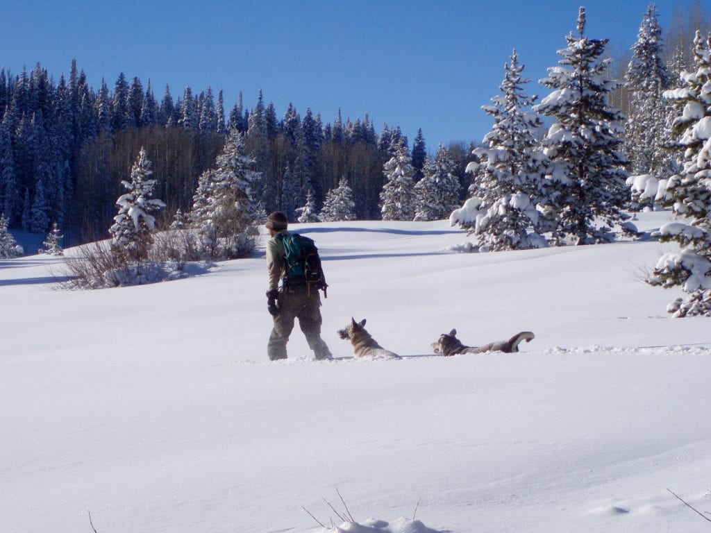 The Best Snowshoeing Trails Near Denver Nomad Colorado